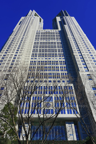 青空にそびえる東京都庁舎(東京都庁第一本庁舎) 新宿中央公園前の公園通りからの写真素材 [FYI04770919]