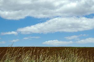 地平線の見える壮大な農地の写真素材 [FYI04770938]