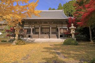 11月 紅葉と銀杏の東光寺の写真素材 [FYI04771210]