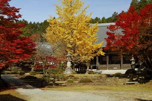 11月 紅葉と銀杏の東光寺の写真素材 [FYI04771211]