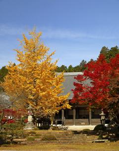 11月 紅葉と銀杏の東光寺の写真素材 [FYI04771213]