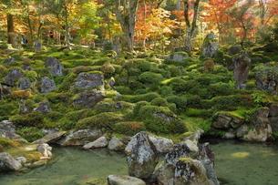 11月 紅葉の西明寺   滋賀の秋景色の写真素材 [FYI04771216]