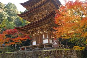 11月 紅葉の西明寺 滋賀の秋景色の写真素材 [FYI04771226]