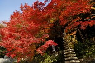 11月 紅葉の犬山寂光院の写真素材 [FYI04771235]
