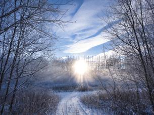 冬の北海道の写真素材 [FYI04771367]