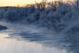 北海道冬の風景 阿寒郡鶴居村の樹氷と気嵐の写真素材 [FYI04771413]
