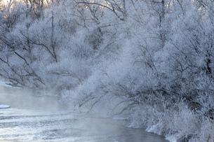 北海道冬の風景 阿寒郡鶴居村の樹氷と気嵐の写真素材 [FYI04771416]