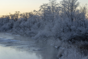 北海道冬の風景 阿寒郡鶴居村の樹氷と気嵐の写真素材 [FYI04771417]