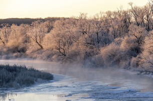 北海道冬の風景 阿寒郡鶴居村の樹氷と気嵐の写真素材 [FYI04771423]