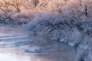 北海道冬の風景 阿寒郡鶴居村の樹氷と気嵐の写真素材 [FYI04771424]