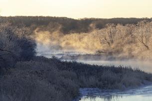 北海道冬の風景 阿寒郡鶴居村の樹氷と気嵐の写真素材 [FYI04771427]