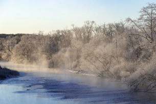 北海道冬の風景 阿寒郡鶴居村の樹氷と気嵐の写真素材 [FYI04771431]
