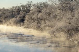 北海道冬の風景 阿寒郡鶴居村の樹氷と気嵐の写真素材 [FYI04771435]