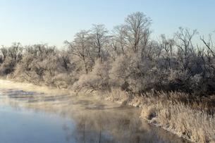 北海道冬の風景 阿寒郡鶴居村の樹氷と気嵐の写真素材 [FYI04771437]