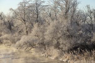 北海道冬の風景 阿寒郡鶴居村の樹氷と気嵐の写真素材 [FYI04771438]