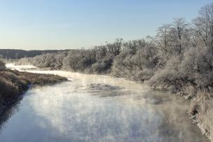 北海道冬の風景 阿寒郡鶴居村の樹氷と気嵐の写真素材 [FYI04771440]