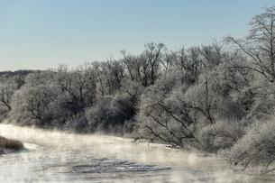 北海道冬の風景 阿寒郡鶴居村の樹氷と気嵐の写真素材 [FYI04771442]