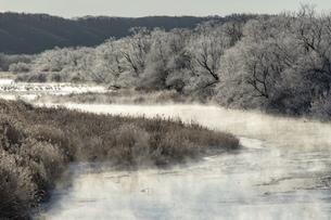 北海道冬の風景 阿寒郡鶴居村の樹氷と気嵐の写真素材 [FYI04771443]