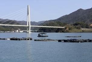 舞鶴湾に架かる舞鶴クレインブリッジとカキ養殖の写真素材 [FYI04771499]