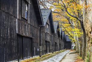 建ち並ぶ山居倉庫と紅葉のケヤキ並木の写真素材 [FYI04771529]