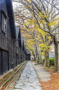 建ち並ぶ山居倉庫と紅葉のケヤキ並木の写真素材 [FYI04771530]