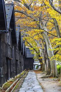 建ち並ぶ山居倉庫と紅葉のケヤキ並木の写真素材 [FYI04771531]