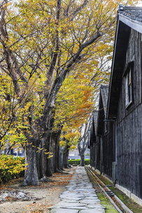 建ち並ぶ山居倉庫と紅葉のケヤキ並木の写真素材 [FYI04771533]
