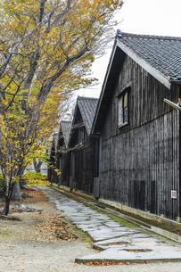 建ち並ぶ山居倉庫と紅葉のケヤキの写真素材 [FYI04771534]