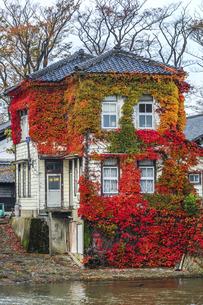 色鮮やかに紅葉したナツヅタが絡む建物の写真素材 [FYI04771540]