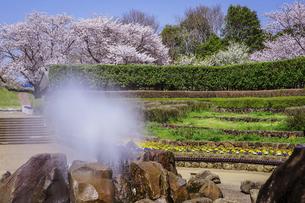 春の公園 「神奈川県立四季の森公園」の南口広場(噴水広場)の写真素材 [FYI04771657]