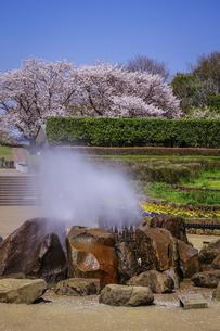 春の公園 「神奈川県立四季の森公園」の南口広場(噴水広場)の写真素材 [FYI04771658]