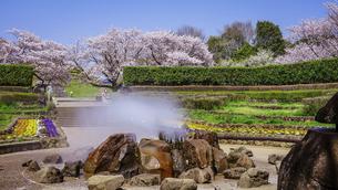 春の公園 「神奈川県立四季の森公園」の南口広場(噴水広場)の写真素材 [FYI04771659]