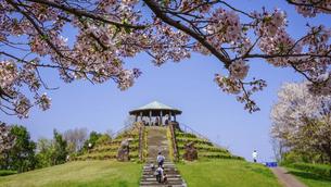 春の公園 「神奈川県立四季の森公園」の桜に囲まれた展望広場の写真素材 [FYI04771660]
