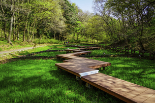 春の公園 「神奈川県立四季の森公園」しょうぶ園の木道の写真素材 [FYI04771663]