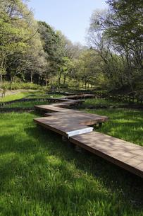 春の公園 「神奈川県立四季の森公園」しょうぶ園の木道の写真素材 [FYI04771664]