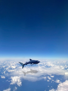 雲の上を泳ぐクジラの写真素材 [FYI04771769]