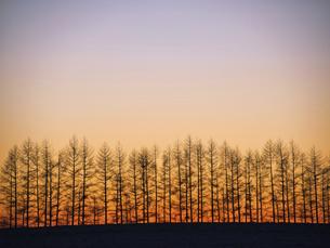 朝焼けと防風林の写真素材 [FYI04771781]