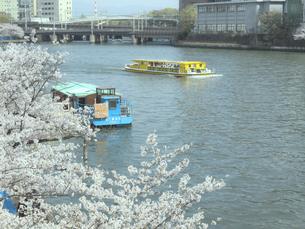 遊覧船と桜の写真素材 [FYI04772044]