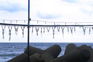 京都府 京丹後市  日本海の風に揺れるイカの干し物の写真素材 [FYI04772062]