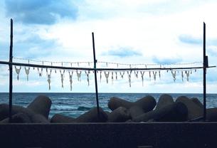 京都府京丹後市 蛸が干された秋の海岸通りの写真素材 [FYI04772070]