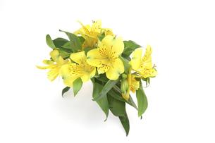 アルストロメリアの花束の写真素材 [FYI04772212]
