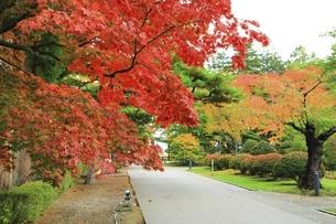 香雪園の秋 の写真素材 [FYI04772484]