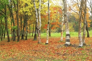 羊蹄山自然公園の写真素材 [FYI04772522]