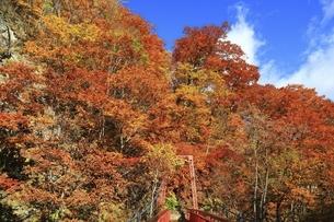 紅葉の定山渓の写真素材 [FYI04772540]