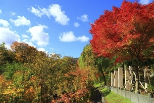 紅葉の定山渓の写真素材 [FYI04772546]