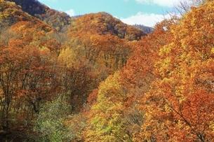 紅葉の定山渓の写真素材 [FYI04772553]