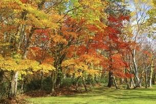 支笏湖 野鳥の森の写真素材 [FYI04772562]