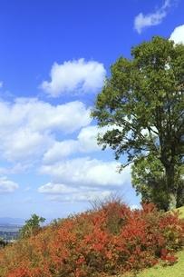 秋の若草山の写真素材 [FYI04772575]