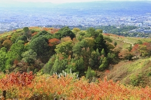 秋の若草山と奈良市街の写真素材 [FYI04772576]