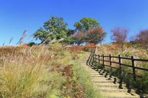 秋の若草山の写真素材 [FYI04772589]